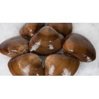 Almeja Chocolata bolsa 1 kg.