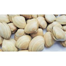 Almeja Blanca bolsa 900 grs